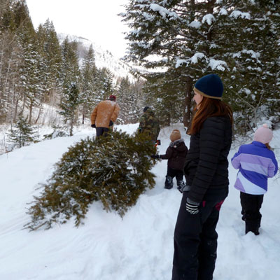 its actually possible to make cutting down your own christmas tree a family tradition as it is an exciting experience colorado is one of the best places - Colorado Christmas
